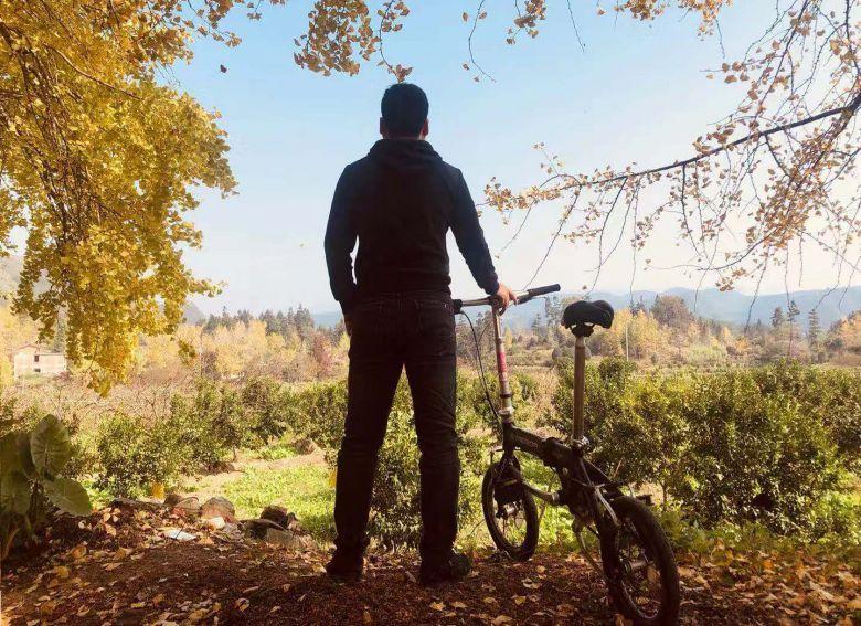 骑单车去追寻桂林海洋银杏,秀美如画山水间的一片金色